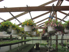 hanging baskets Getting Started